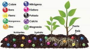nutrientes_presentes_en_el_sustrato