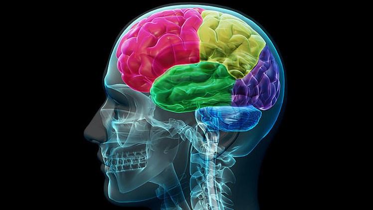 Tu cerebro pide estas vitaminas a gritos