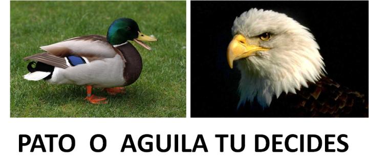 Aguila-o-pato