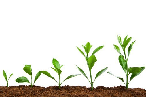Aprende a crecer en tu vida personal